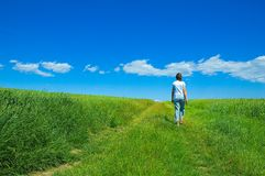 Person in green field 2 Stock Image