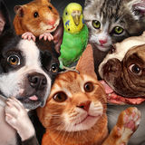 Pet Group Stock Images
