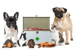 Pets with first aid kit Stock Photo