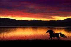 Pferd und Sonnenuntergang Stockfotografie