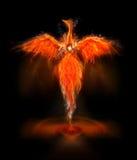 Phoenix bird Stock Image