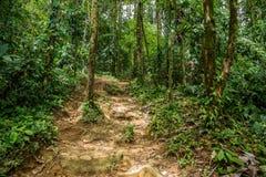 Piccole tracce nella giungla densa verde Immagine Stock