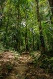 Piccole tracce nella giungla densa verde Fotografia Stock Libera da Diritti