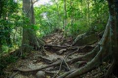 Piccole tracce nella giungla densa verde Immagini Stock Libere da Diritti