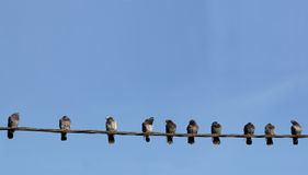 Pigeons on wire Royalty Free Stock Image