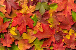 Colorful Autumn Fall Leaves Stock Images