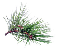 Pine Cutting Stock Photography