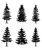 Pine trees collection Stock Photos