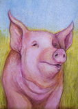Pink pig color sketch Royalty Free Stock Photos