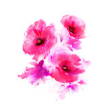 Pink poppies Stock Photos