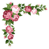 Pink vintage roses, rosebuds and leaves. Stock Images