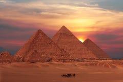 Piramidi di Giza Immagini Stock