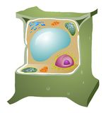 Plant Cell Royalty Free Stock Images