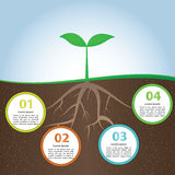 Plant And Root Infographic Background Design Template Royalty Free Stock Photos