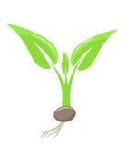 Plant seedling Stock Photos