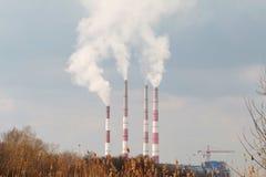 Plant with  smog. Stock Photo