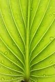Plants Royalty Free Stock Photos