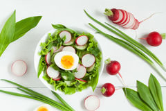 Plate of healthy seasonal salad  Stock Photography