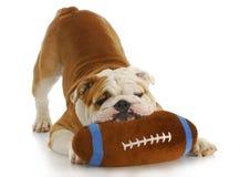 Playful dog Royalty Free Stock Photos