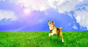 Playful dog jumping Stock Photo