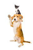 Playful dog with a kitten Stock Images