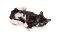 Playful Kitten With Back Legs Up Royalty Free Stock Images
