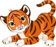 Playful tiger cub Stock Images