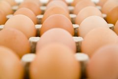 Plenty of eggs Stock Photos
