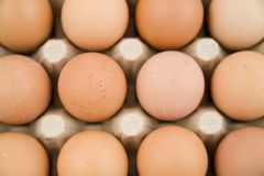 Plenty of eggs Royalty Free Stock Image