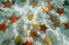 Plenty of starfish on a sandy ocean floor Royalty Free Stock Photography