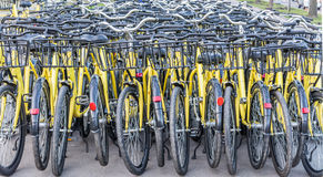 Plenty of yellow bikes Royalty Free Stock Photos