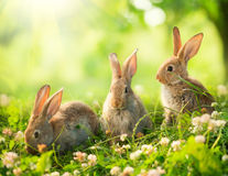 Pochi coniglietti di pasqua Fotografia Stock