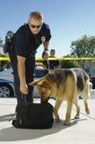 Police Dog Sniffing Bag Stock Image