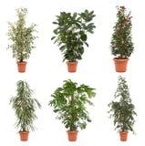 Pot plants Royalty Free Stock Photography