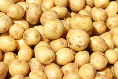 Potatoes background Stock Photos