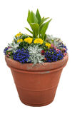 Potted Plants Royalty Free Stock Photos