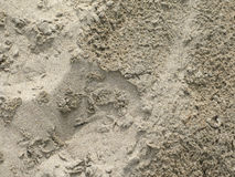 Primo piano piovoso della sabbia Immagine Stock