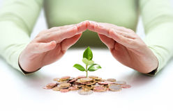 Protect new business start-up - with hands and plant Stock Photos