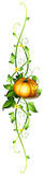 A pumpkin decor Stock Images