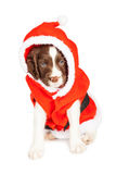 Puppy Dog Dressed as Santa Claus Royalty Free Stock Photography
