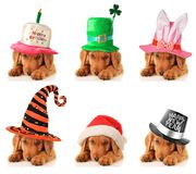 A puppy for every occasion Stock Photography