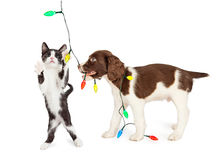 Puppy and Kitten Playing With Christmas Lights Royalty Free Stock Image