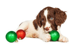 Puppy Playing With Christmas Ornaments Royalty Free Stock Photos