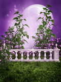 Purple garden with a fence Stock Images