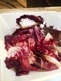 Purple lettuce Royalty Free Stock Photo