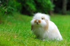 Rabbit8 Fotografia Stock Libera da Diritti