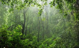 Rain-forest Royalty Free Stock Image