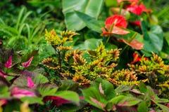 Rainforest plants Royalty Free Stock Photos