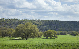 Ranch pasture in the Texas Hill Country on a sunny afternoon Stock Images