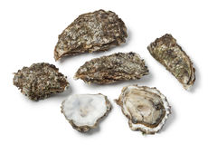 Raw Pacific oysters Stock Image